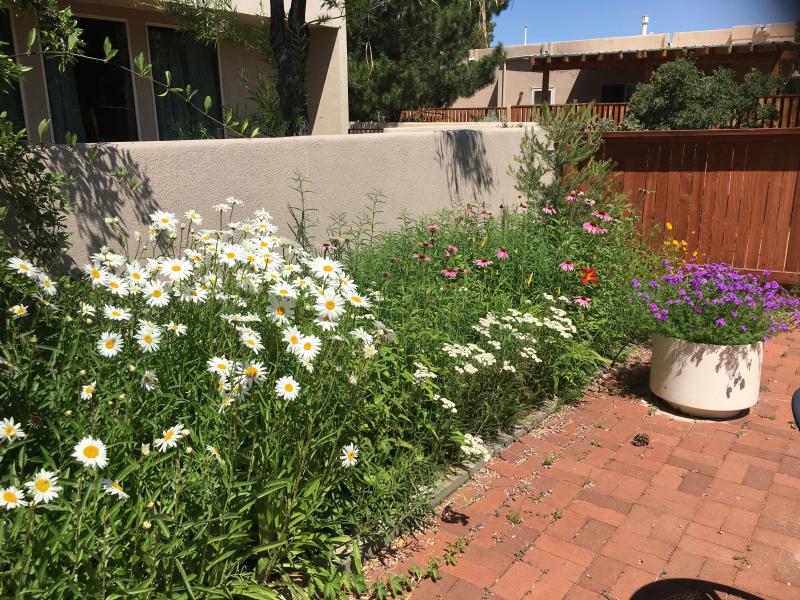 Helen's garden