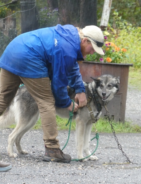 Denali Dogs 5