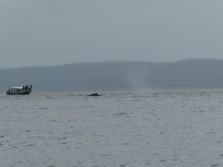 MendenhallGlacier.whale