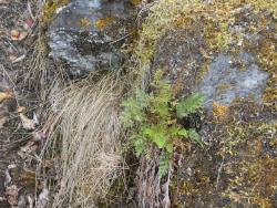 MendenhallGlacier.Plantlife