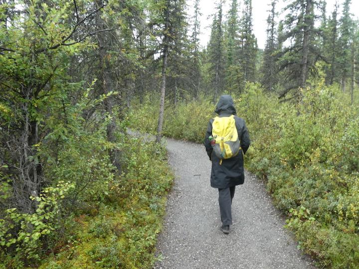 Nature walk in rain
