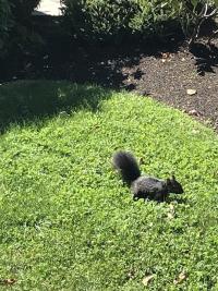 Vancouver.Airbnb.squirrel
