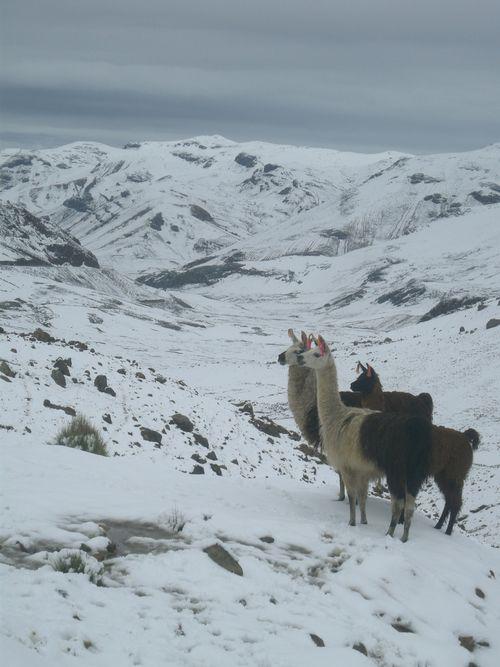17 Llamas, and what a backdrop!