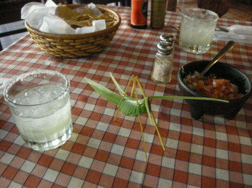 """14 - Little guy made us a """"chapulín"""" while we waited for dinner"""